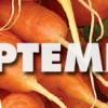 September – Carrots