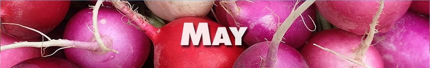 May – Radishes