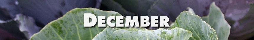 December – Cabbage