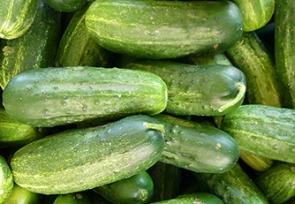 August – Cucumbers