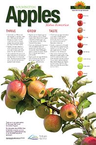 WA-apples