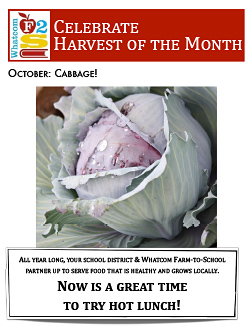 flyer-october-cabbage