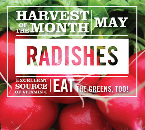radish-school-lunches-harvest-of-the-month