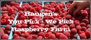 Haugen's Raspberries