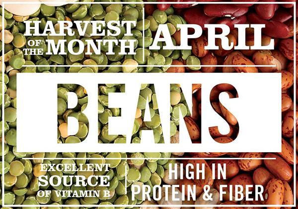 april-beans-2018