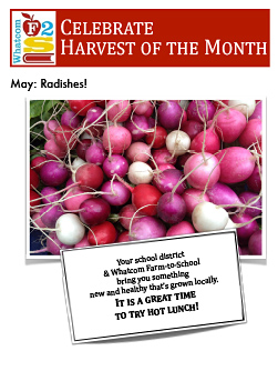 flyer-may-radishes