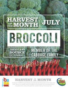 harvest-of-month-broccoli