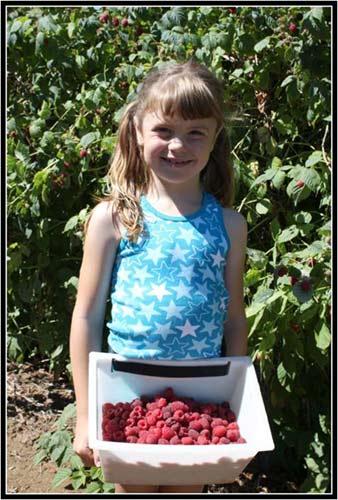 Haugen's Raspberries 3
