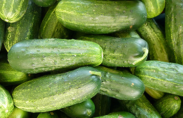 cucumbers-school-harvest-lunches