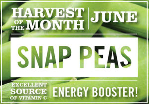 June-Snap-Peas-harvest-of-the-month