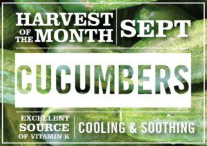 Cucumbers-September-2018